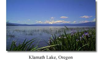 Aphanizomenon Flos-Aquae Klamath Valley Botanicals, klamath lake